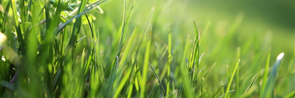 Your lawn and landscape... the way that it should be
